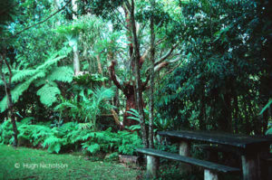4-Lloyd-garden_Coffs-86