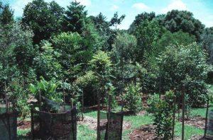 5-Salzer-garden-Teven_89